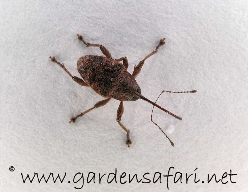gardensafari beetles and other insects with many detailed pictures