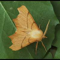 Photograph of September Thorn