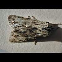 picture of the Sprawler