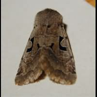 photograph of Hebrew Character