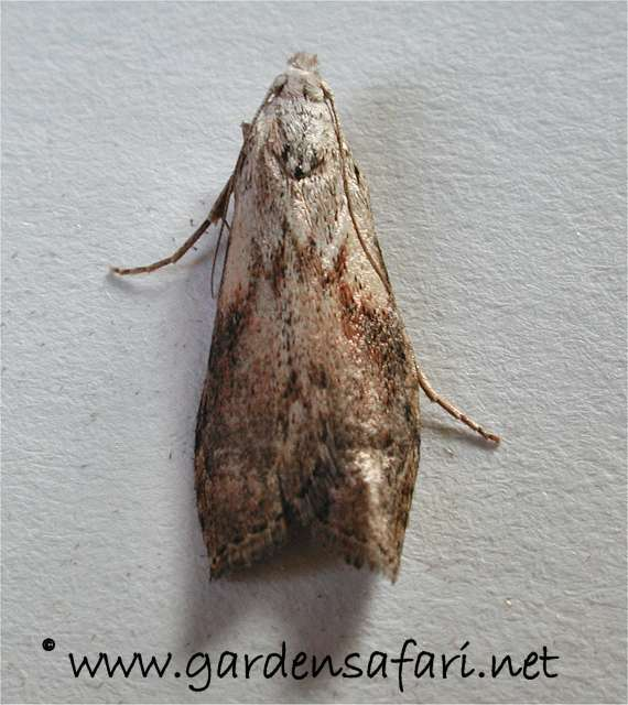 Moths In My House During Winter House Plan 2017