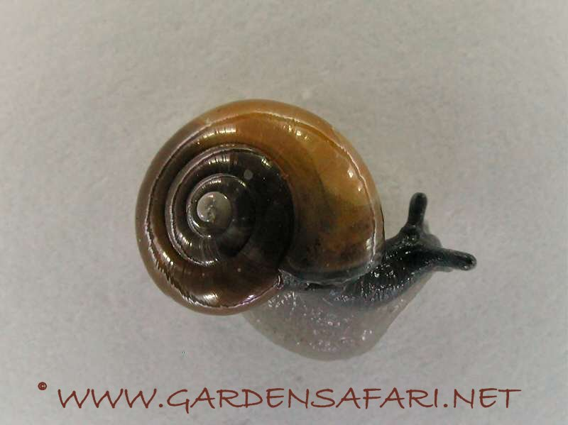 Gardensafari Snails, Slugs And Worms (with lots of pictures)