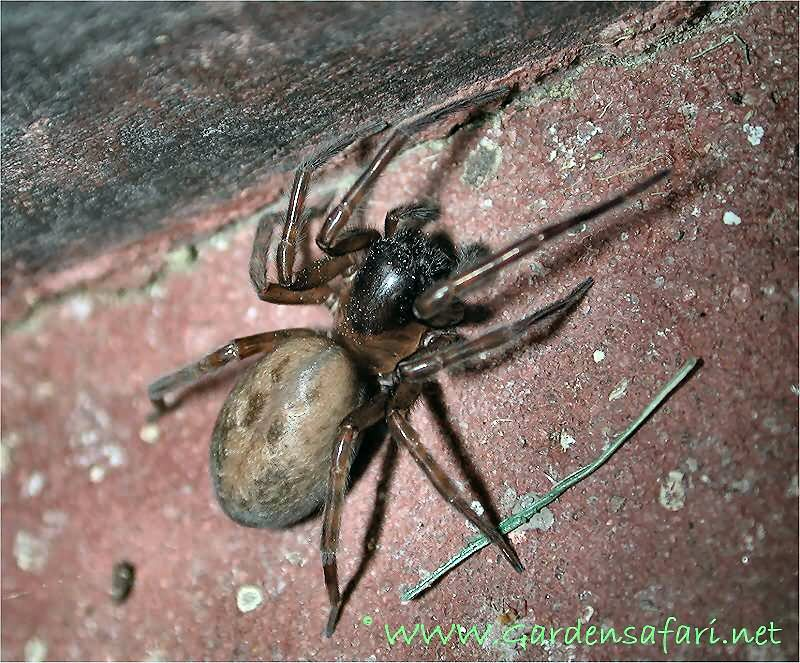 Different types of poisonous spiders