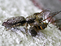 photograph of the Fencepost jumper