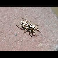 Photograph Zebra Spider