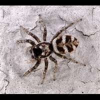 Photograph of a spider on a wall