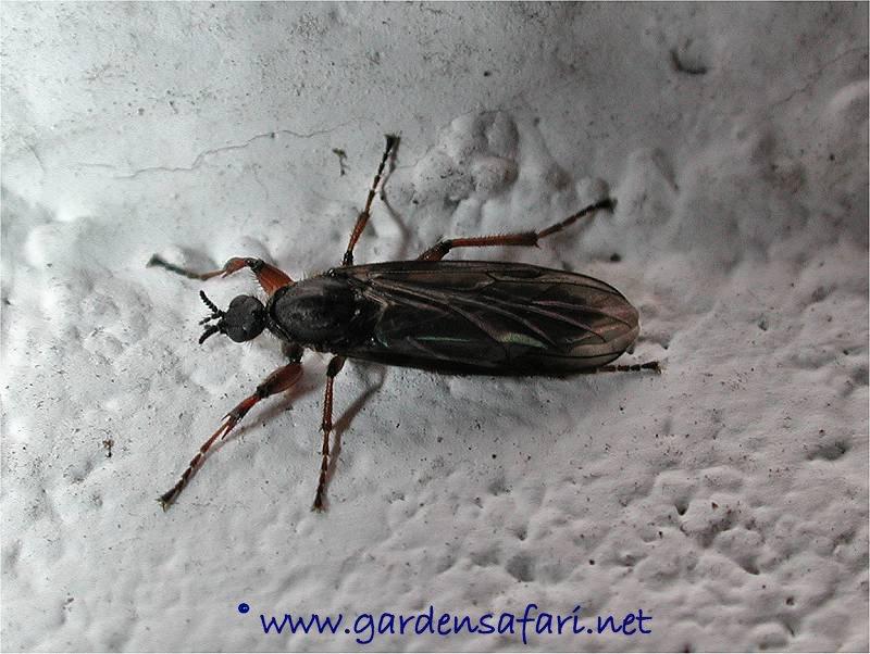 tiny flying bugs in house that bite zef jam. Black Bedroom Furniture Sets. Home Design Ideas